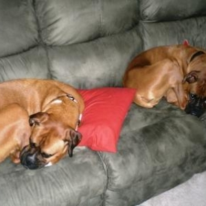 Boxer Bookends..