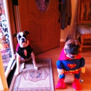 Roxy and Bruzer dressed up.
