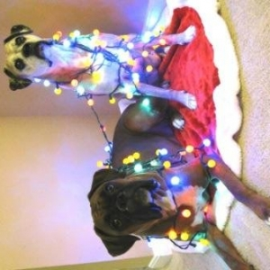 Christmas boxers lit up...