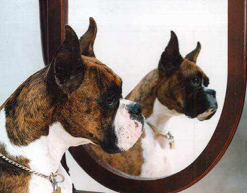 Different Types Of Collars Boxer World Forums