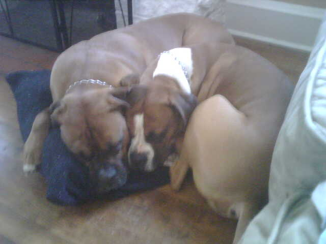 Butch_and_Tyson_snuggled_up_on_pillow_2008
