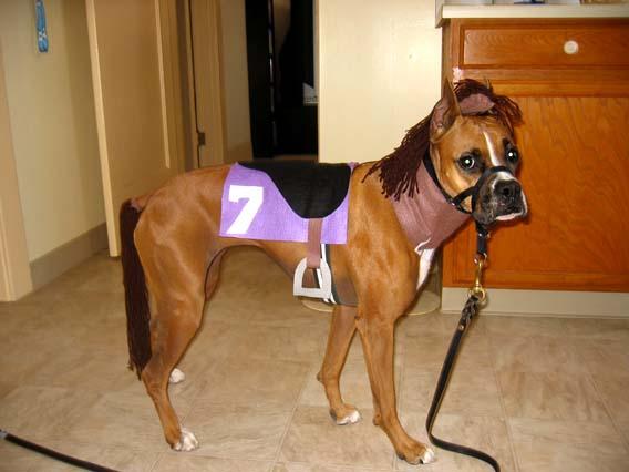 Horse & Boxer Dog Photo Gallery u0026 Postcard - Halloween 2006